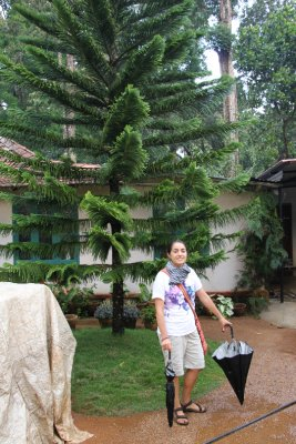Chile tree in India