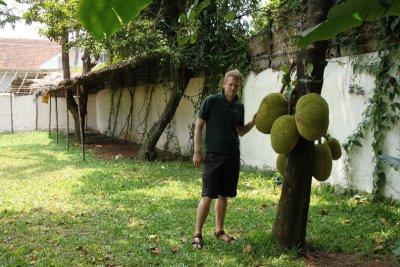big jackfruit