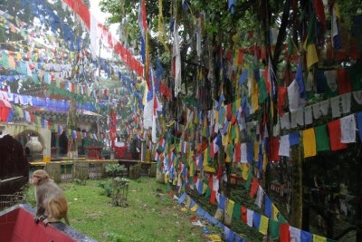 Some Buddhist flags...