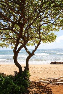 shade by the beach