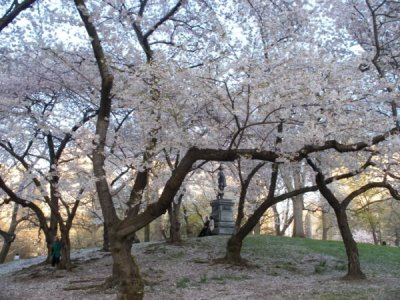 Central_Park_Blossom,_New_York