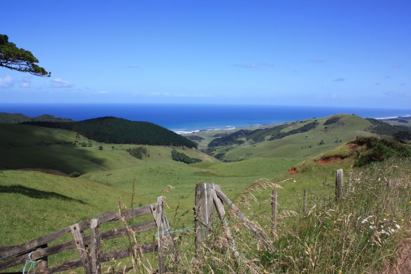large_NZ_Northla..upo_014.jpg