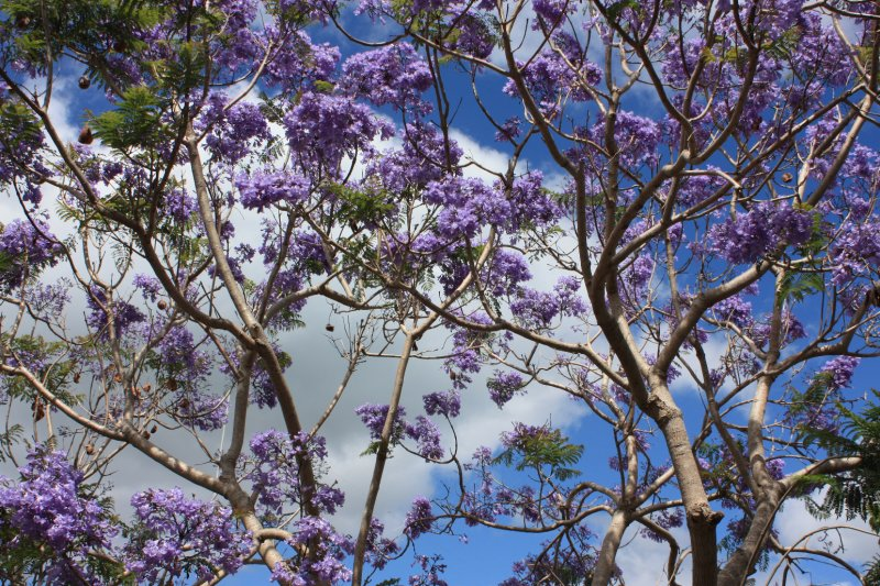 large_NZ_Northla..upo_029.jpg