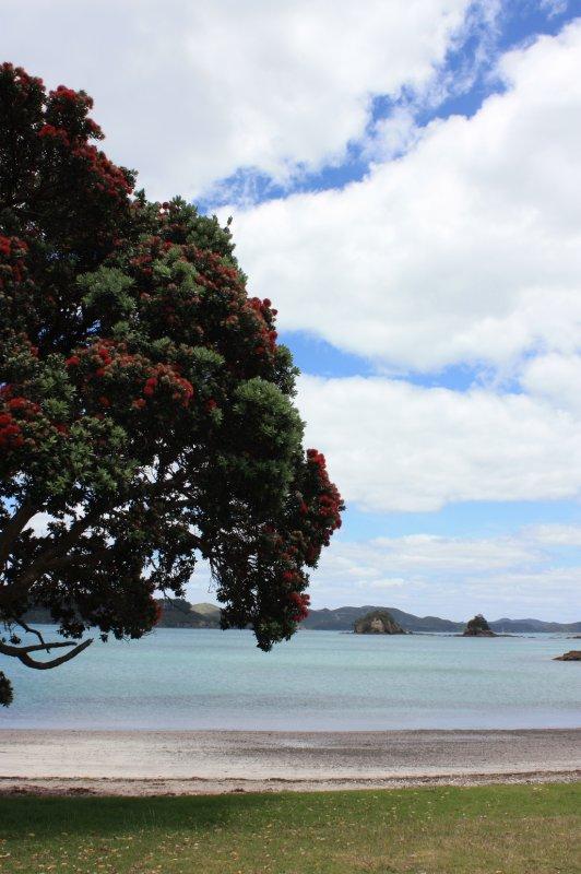 large_NZ_Northla..upo_036.jpg