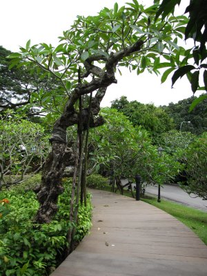 08__Trees_and_walkway.jpg