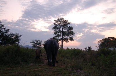 20f__KNP_elephants.jpg