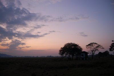 20h__KNP_elephants.jpg