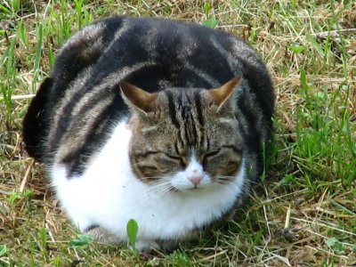 77m__Oberh..fat_cat.jpg