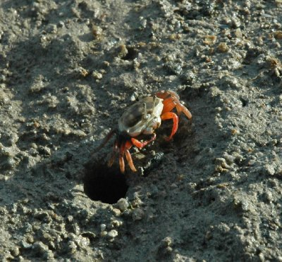 932g__Low_Tide_crab.jpg