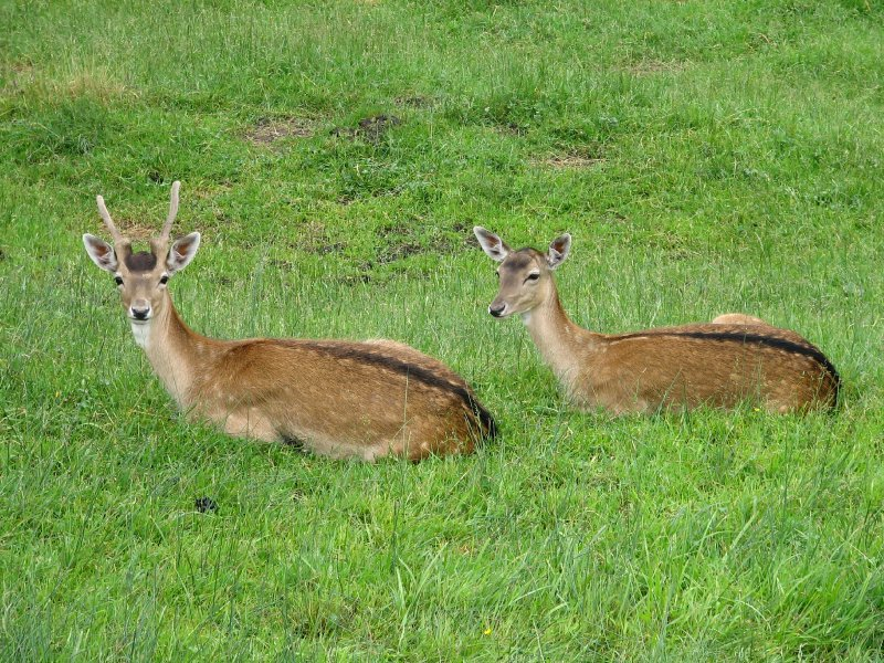 large_103e__To_G..g_deers.jpg