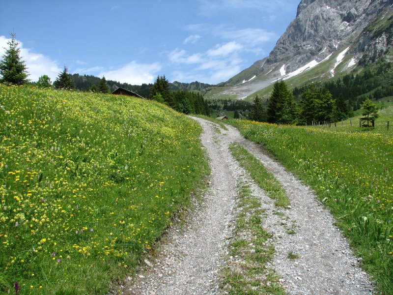 large_114c__To_G_Scheidegg.jpg