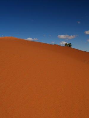 Sand dune Simpson Desert