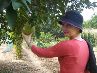 Me in an orchard of Pomelo trees