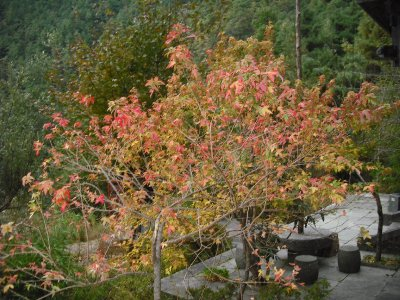 Autumn leaves, Dali