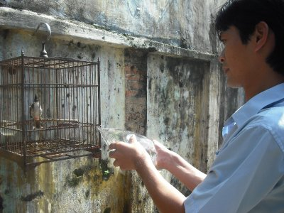 Young man gently spraying his bulbul, the only birdbath she can get!