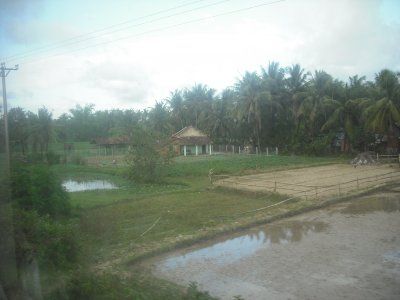 Agricultural scene, north of Hue