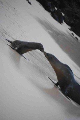 Dag 2 Galapagos (170)blog
