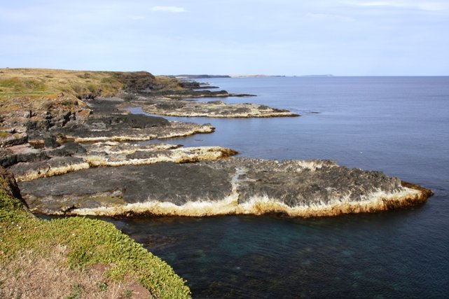The Nobbies on Phillip Island