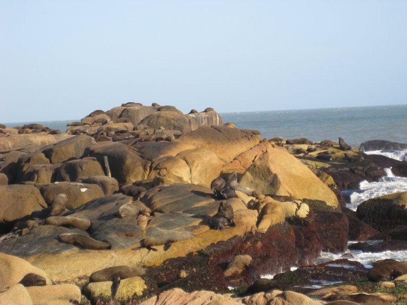 zeewolven
