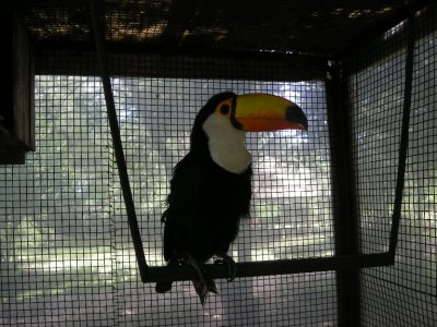 Toucan (in cage unfortunately)
