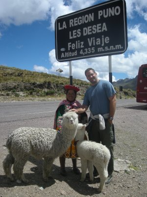 Highest point on the road and Llamas
