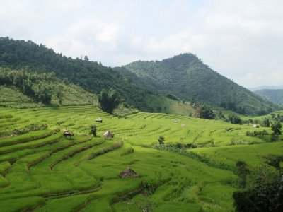 Green rice terraces, Mae Hong Son