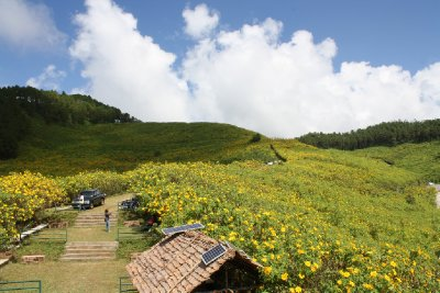 Sunflower Festival (Bua Thong) Mae Hong Son
