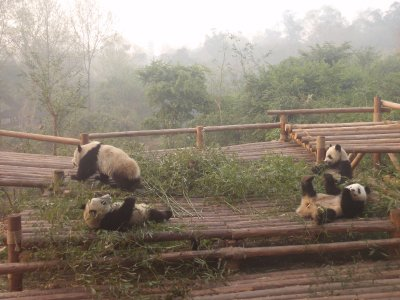 Pandas on platform
