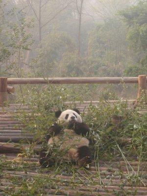 my Kinda Panda