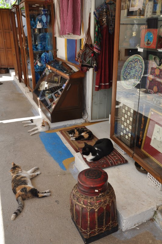 Cats of Kas