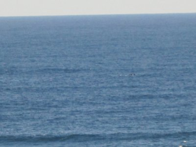 Humpback whale in the yonder