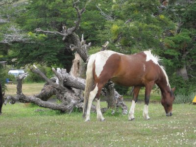 Horse Hanging Out at the Campground