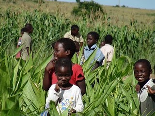 By incorporating indigenous vegetables and increasing crop diversity, farmers in Zimbabwe improved their diets and increased agricultural resilience. (Photo credit: Bernard Pollack)