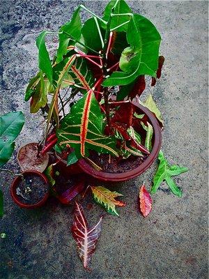 Portrait of a plant