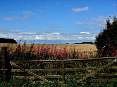 'Ricket' fences