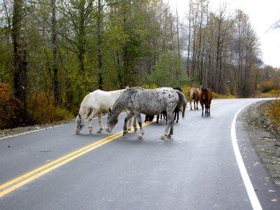 En route to Quesnel #2, 2011