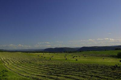Trueman ranch Quesnel,2010