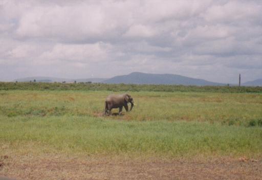 Selous Game Reserve,  Tanzania 005