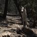 Wild Spirit Wolf Sanctuary 2