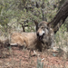 Wild Spirit Wolf Sanctuary 4