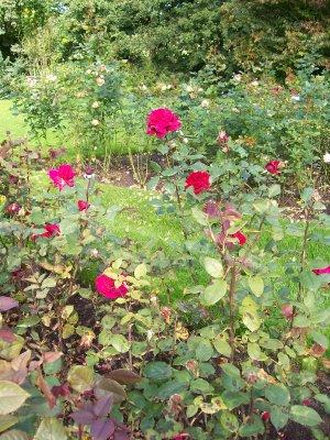 Rosarium_and_park_022.jpg
