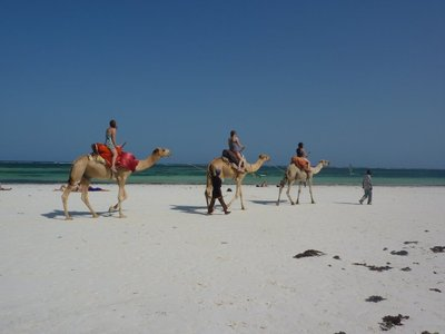 Diani Beach Transport