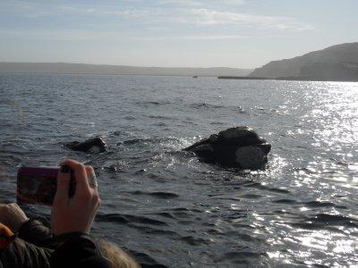 Puerto_Madryn__11_.jpg