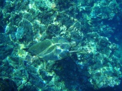 sea-turtle-swimming.jpg