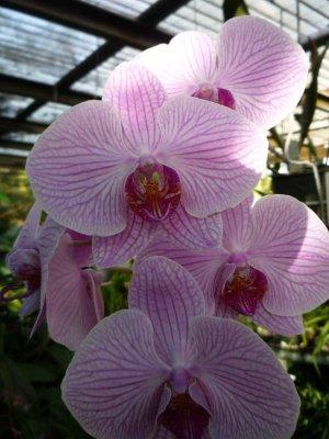 Cairns Botanic Gardens (Orchids)