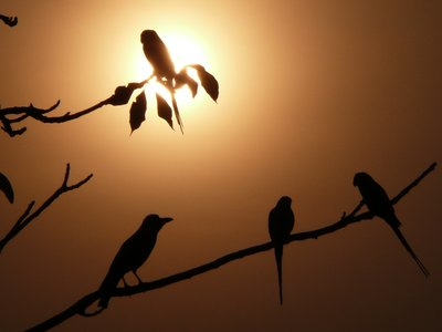 A crow, three parrots and a sunset