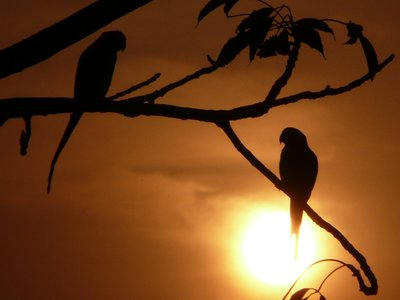 Two parrots and a sunset
