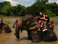 Me and a load of swimming elephants