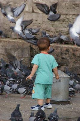 More pıgeons
