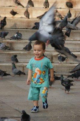 Lıttle boy chasıng pıgeons